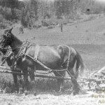 Nelson Butler mowing hay on the Butler Ranch