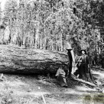 Logging for Blair Mill at Sly Park